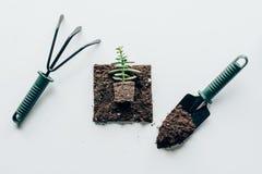 Vista superior de la planta verde hermosa en suelo y herramientas que cultivan un huerto Imagen de archivo libre de regalías