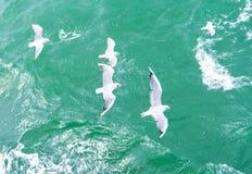 Vista superior de la silueta de las gaviotas del vuelo El pájaro vuela sobre el mar Libración de las gaviotas sobre el mar azul p Imagen de archivo