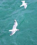 Vista superior de la silueta de las gaviotas del vuelo El pájaro vuela sobre el mar Libración de las gaviotas sobre el mar azul p Foto de archivo libre de regalías