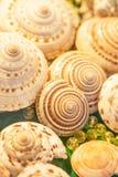 Vista superior de las cáscaras espirales exóticas del mar con mármoles de las bolas de cristal en el terciopelo verde Bokeh hermo imagenes de archivo
