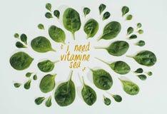 vista superior de las hojas frescas hermosas del verde y las palabras necesito el mar de la vitamina foto de archivo libre de regalías