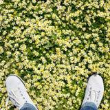 Vista superior de las zapatillas de deporte blancas en el fondo amarillo verde y blanco del prado de la manzanilla y fotos de archivo libres de regalías