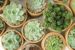 Vista superior de los potes suculentos de la planta Imagen de archivo libre de regalías