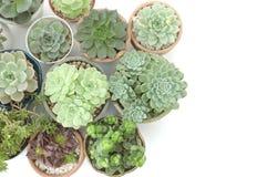 Vista superior de los potes suculentos verdes del houseplant Imágenes de archivo libres de regalías