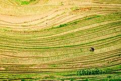 Vista superior de terraços do arroz do Longji de Longsheng em Guilin, China fotos de stock royalty free