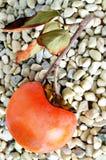 Vista superior de um caqui orgânico maduro, vertical Imagem de Stock Royalty Free