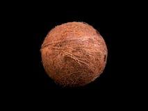 Vista superior de um coco tropical e inteiro em um fundo preto Close-up da porca fresca Cocos saõs completamente das vitaminas Imagem de Stock Royalty Free