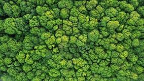 Vista superior de un bosque verde joven en primavera o verano foto de archivo libre de regalías
