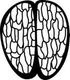 Vista superior de un cerebro humano Fotografía de archivo libre de regalías