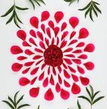 Vista superior de un estampado de flores de los pétalos de la peonía Imágenes de archivo libres de regalías