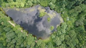 Vista superior de un lago hermoso del bosque almacen de video