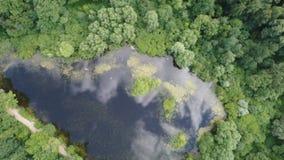 Vista superior de un lago hermoso del bosque almacen de metraje de vídeo