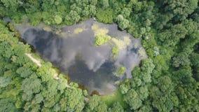 Vista superior de un lago hermoso del bosque metrajes