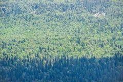 Vista superior de un modelo de los seamlesss del bosque Imágenes de archivo libres de regalías