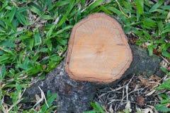 Vista superior de un tocón de árbol del corte Imágenes de archivo libres de regalías