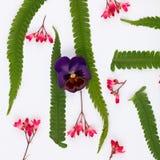 Vista superior de una composición de la flor en un fondo blanco Imagen de archivo libre de regalías