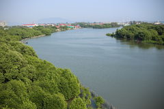 Vista superior del bosque con los árboles y el río Fotografía de archivo libre de regalías