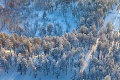 Vista superior del bosque en la mañana del invierno Imagen de archivo libre de regalías