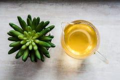 Vista superior del cactus artificial y del té verde Imagen de archivo libre de regalías