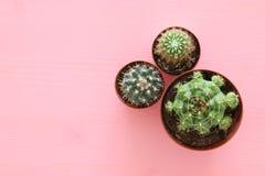 Vista superior del cactus sobre fondo del rosa en colores pastel imagen de archivo