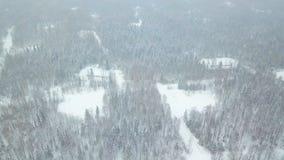 Vista superior del clip conífero nevado del bosque Vista superior del bosque nevado en invierno Imagenes de archivo