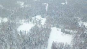 Vista superior del clip conífero nevado del bosque Vista superior del bosque nevado en invierno Fotos de archivo