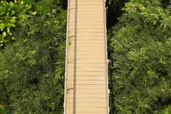 Vista superior del skywalk de madera en parques verdes al aire libre imagenes de archivo