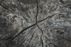 Vista superior del tocón viejo con las grietas de madera hermosas, suelo de madera viejo para las texturas Imagen de archivo libre de regalías