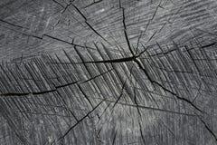 Vista superior del tocón viejo con las grietas de madera hermosas, suelo de madera viejo para las texturas Imágenes de archivo libres de regalías