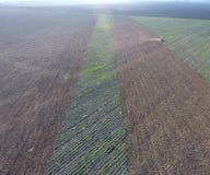 Vista superior del tractor que ara el campo disking el suelo Cultivo de suelo después de las gaviotas de la cosecha que vuelan so Foto de archivo