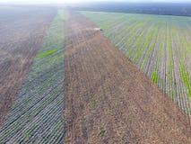 Vista superior del tractor que ara el campo disking el suelo Cultivo de suelo después de las gaviotas de la cosecha que vuelan so Fotografía de archivo libre de regalías