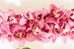 Vista superior do arrangment roxo das orquídeas das pétalas Fotografia de Stock