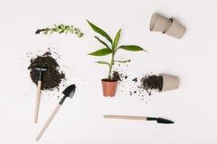vista superior do equipamento de jardinagem arranjado, dos vasos de flores e das plantas verdes isolados no branco Imagem de Stock Royalty Free