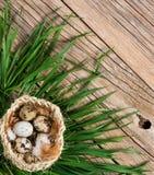 Vista superior dos ovos em uma grama verde Imagem de Stock