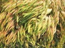 Vista superior na grama seca do gramado fotos de stock