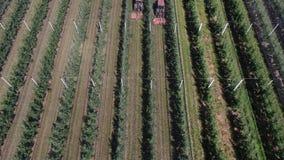 Vista superior nas fileiras longas das árvores de maçã no pomar, 4k vídeos de arquivo