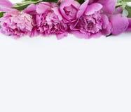 Vista superior Peonnies em um fundo branco Foto de Stock