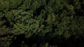 Vista superior a?rea de ?rvores do verde do ver?o no fundo da floresta, C?ucaso, R?ssia vídeos de arquivo