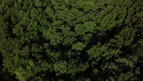 Vista superior a?rea de ?rvores do verde do ver?o no fundo da floresta, C?ucaso, R?ssia filme