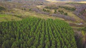 Vista superiore aerea, paesaggio di autunno della clip selvaggia della foresta Vista dell'angolo alto di una depressione della st video d archivio