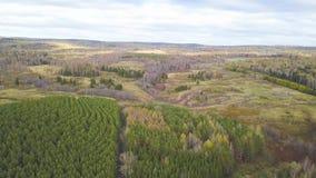 Vista superiore aerea, paesaggio di autunno della clip selvaggia della foresta Vista dell'angolo alto di una depressione della st stock footage