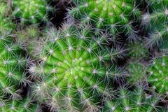 Vista superiore alta vicina del cactus Fotografia Stock Libera da Diritti