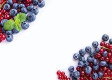 Vista superiore Bacche rosse e blu Mirtilli e ribes rosso maturi su bianco Bacche al confine dell'immagine con lo spazio della co Fotografie Stock Libere da Diritti