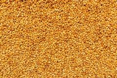 Vista superiore dei chicchi di grano raccolti del grano dell'orzo Fotografia Stock Libera da Diritti