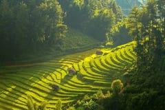 Vista superiore dei giacimenti a terrazze del riso sulla MU Cang Chai District, YenBa fotografia stock libera da diritti