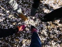 Vista superiore dei piedi in un cerchio contro lo sfondo dei petali caduti dei fiori immagini stock