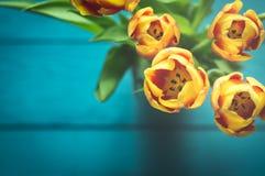 Vista superiore dei precedenti dei tulipani Immagine Stock
