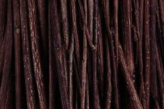 Vista superiore dei rami di legno scuri marroni sottili Immagini Stock Libere da Diritti