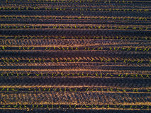 Vista superiore dei solchi del campo di grano Immagini Stock