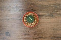 Vista superiore del cactus in vaso sulla tavola di legno fotografie stock libere da diritti